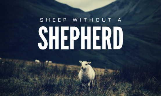 Sheep%20without%20a%20shepherd
